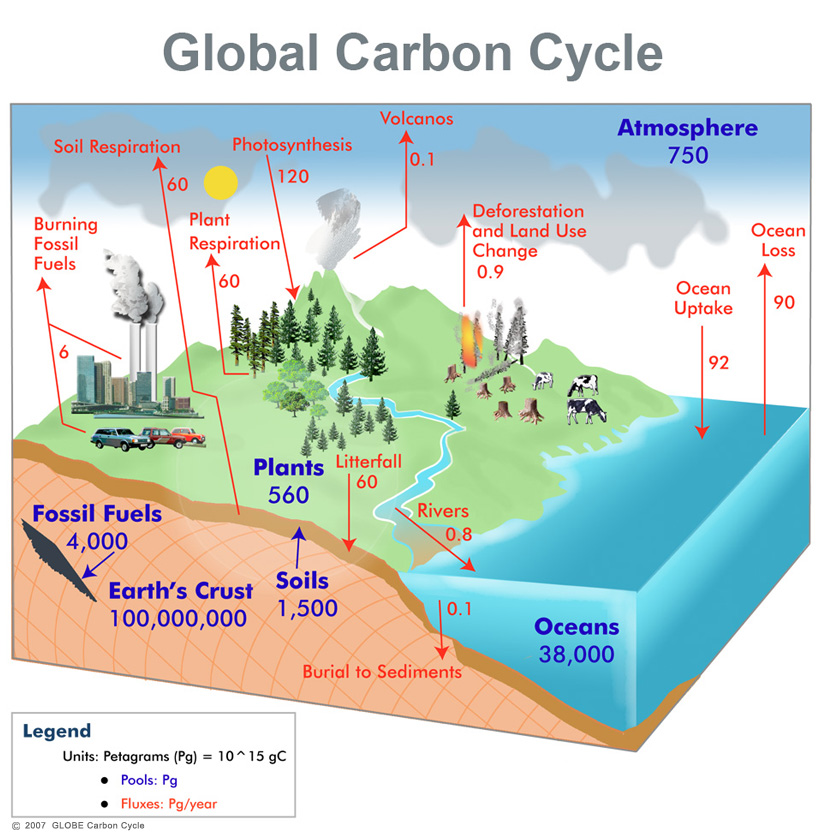 ccdiagram_Global_carbon_cycle